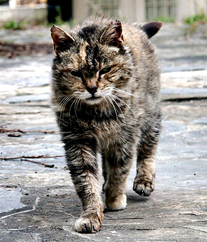 The Dark Forest Content_feral_cat