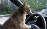 driving lolcat listening to WWOZ
