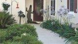 An alligator climbing up a front door