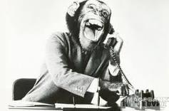 Laughing monkey answering phone