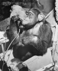 Serious monkey listening on phone dragging on a cigarette