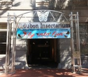 Audubon Butterfly Garden and Insectarium Entrance