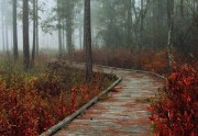 Abita Creek Flatwoods Reserve