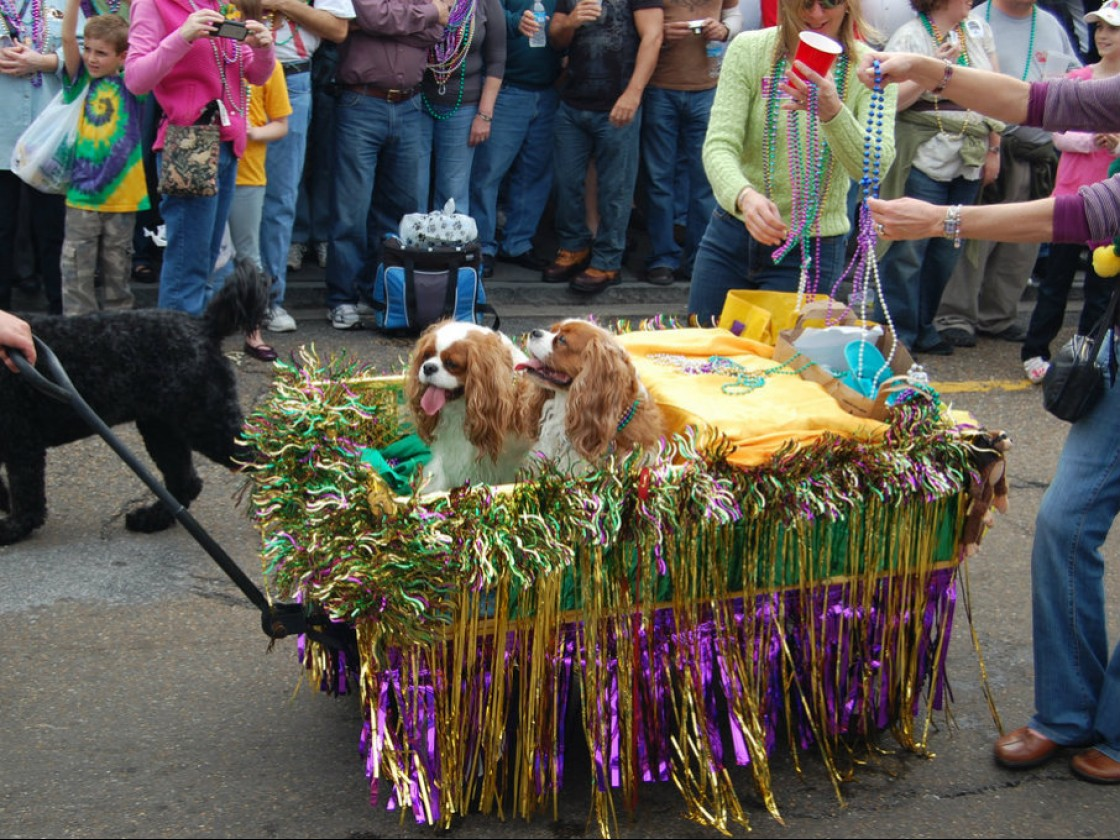 Dogs riding in Barkus